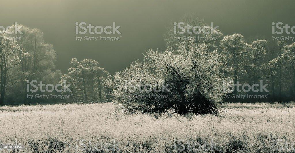 Winter Morn. stock photo