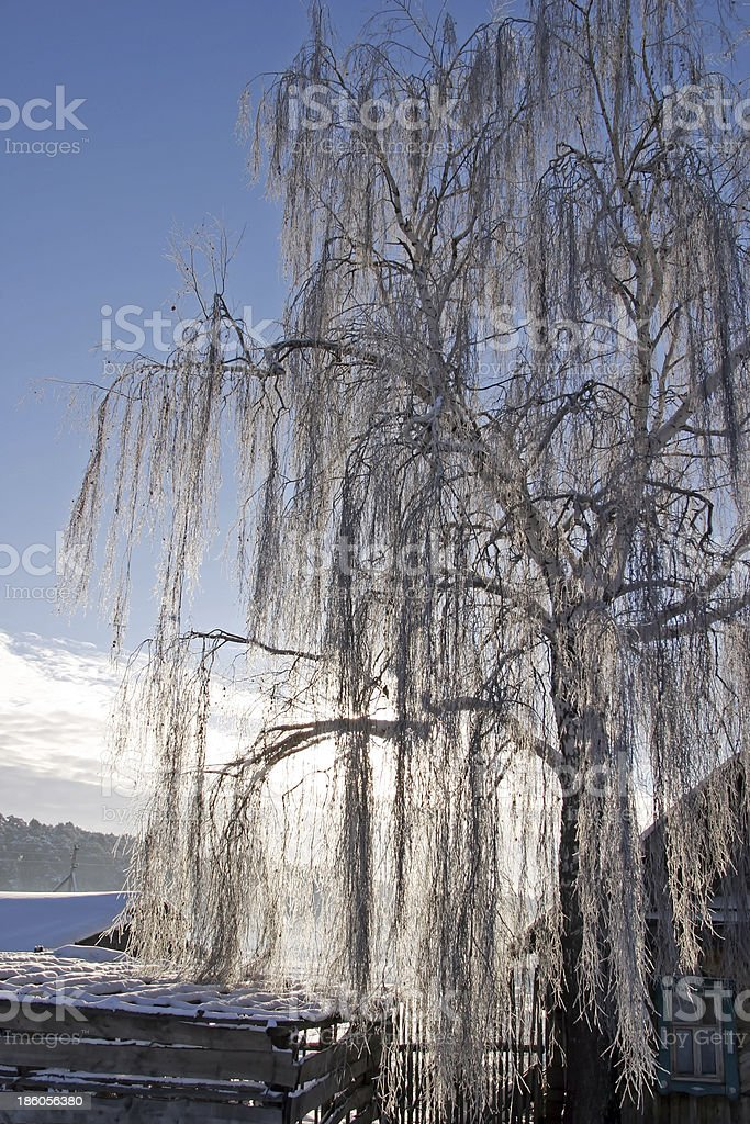 winter morning in the village royalty-free stock photo