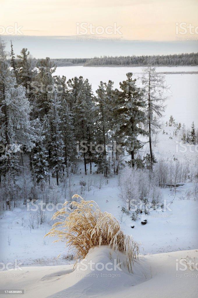 Winter. Morning. Western Siberia. royalty-free stock photo