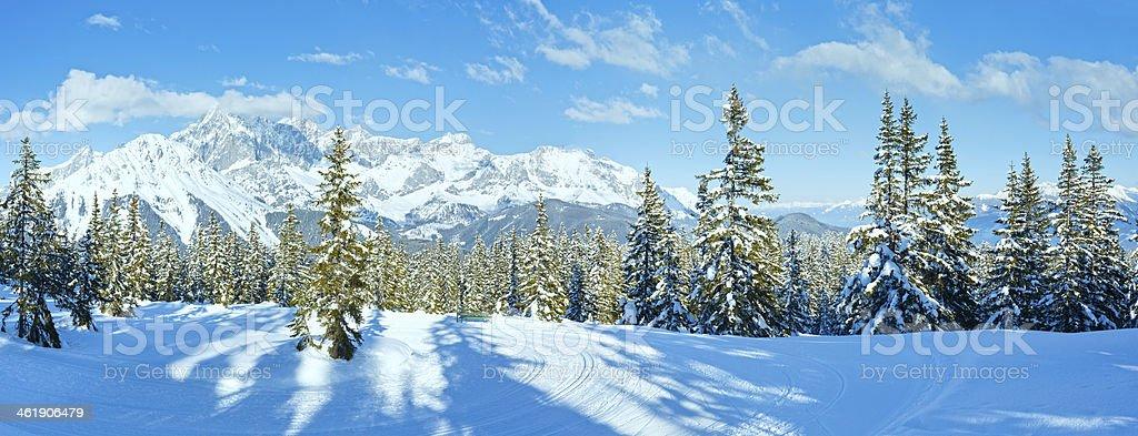 Winter mountain fir forest landscape ( Austria)) stock photo