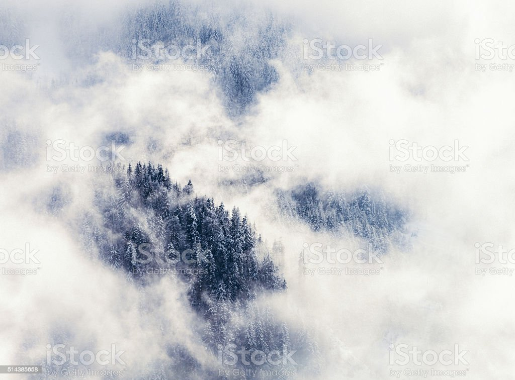 Winter mountain forest shrouded in mist stock photo