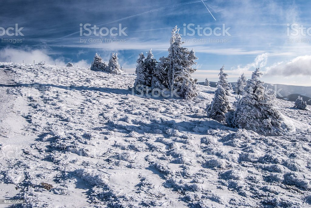 winter mountain meadow with isolated tree in Styria stock photo