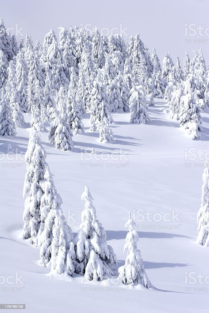 Winter Mountain Scenery royalty-free stock photo