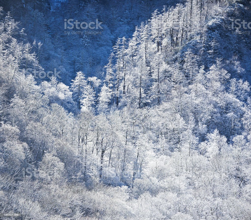 Winter mountain with trees and snow royalty-free stock photo