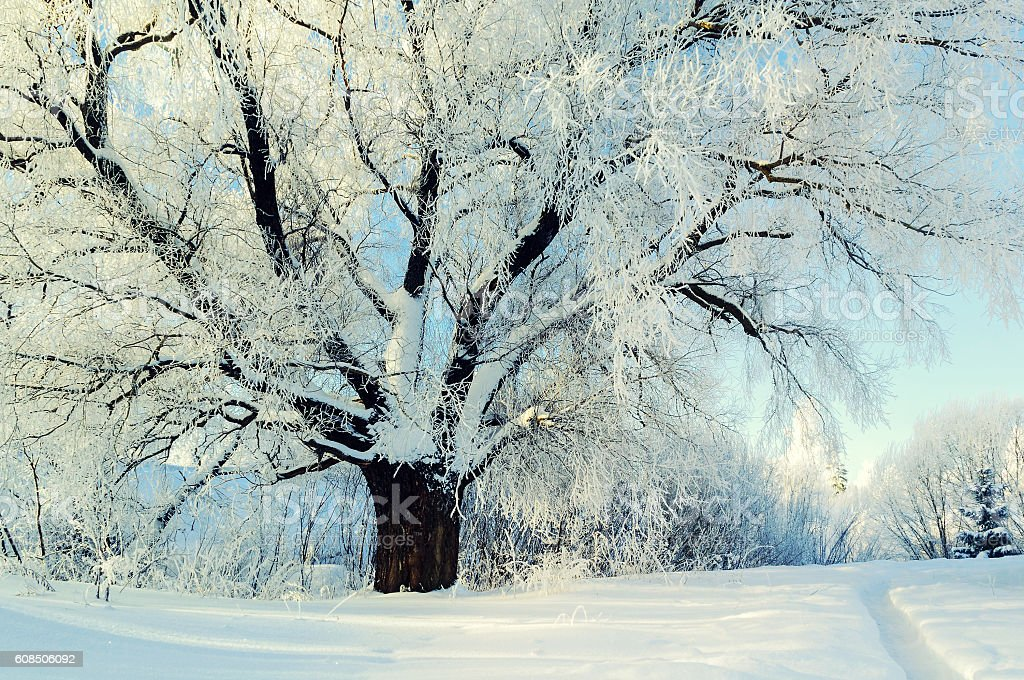 Winter nature. Winter forest landscape in early winter morning stock photo