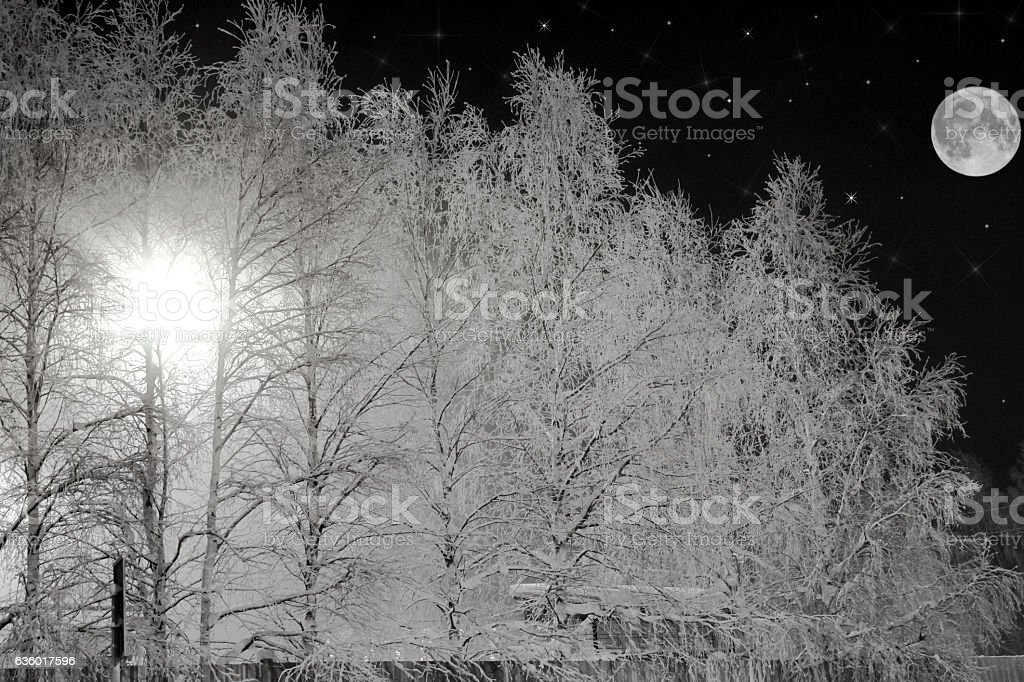 Winter night landscape. stock photo