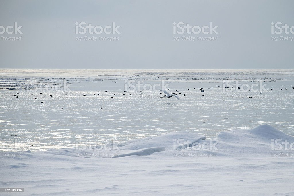 Winter Observations royalty-free stock photo