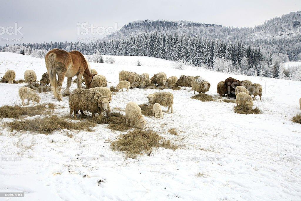 Winter on the farm. royalty-free stock photo
