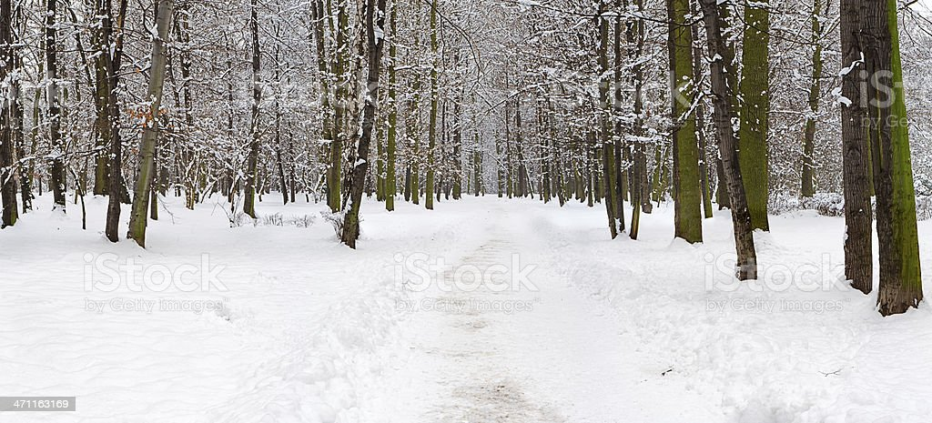Winter panorama - park 40MPix, XXXXL size royalty-free stock photo