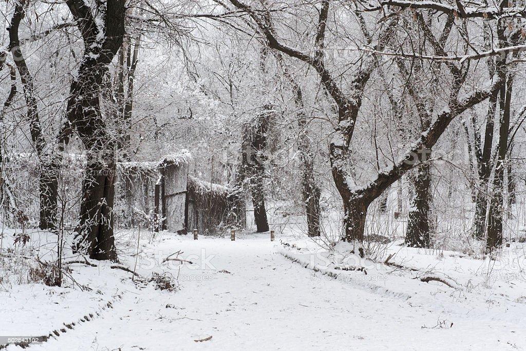 Parque de invierno en la nieve foto de stock libre de derechos