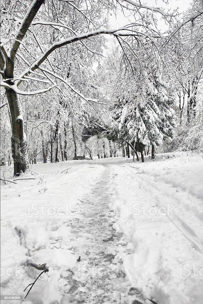 Winter park road. royalty-free stock photo