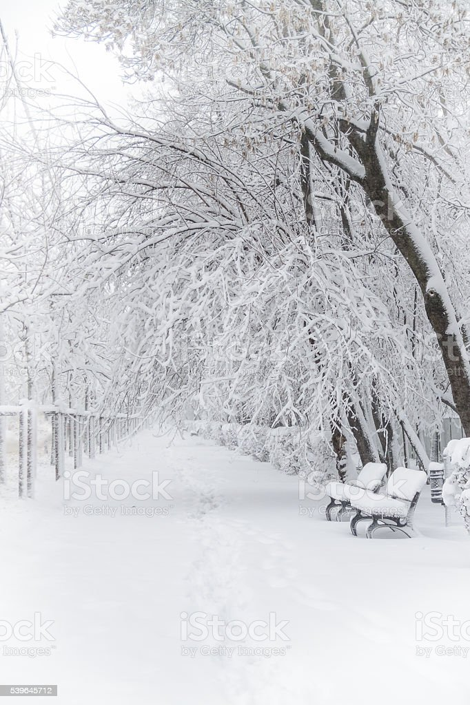 Winter park with benches covered with snow. Park benches foregro stock photo