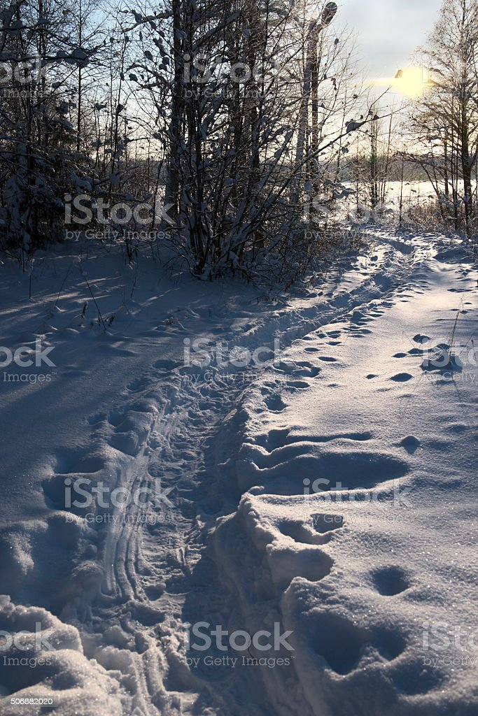 winter path in the woods at sunset stock photo