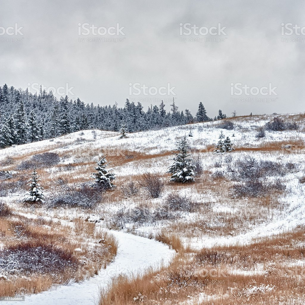 Winter Pathway on a Hill stock photo
