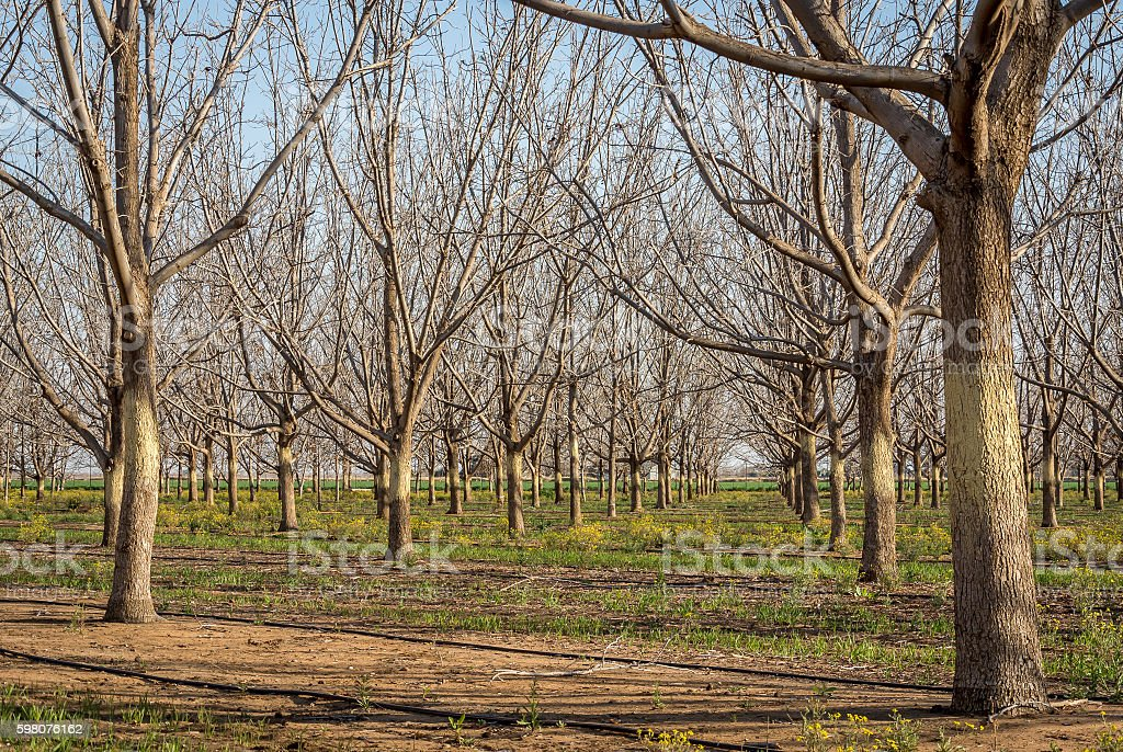 Winter Pecans and ground blossoms stock photo