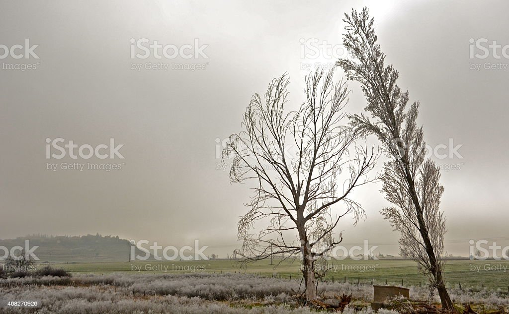 Invierno!! stock photo