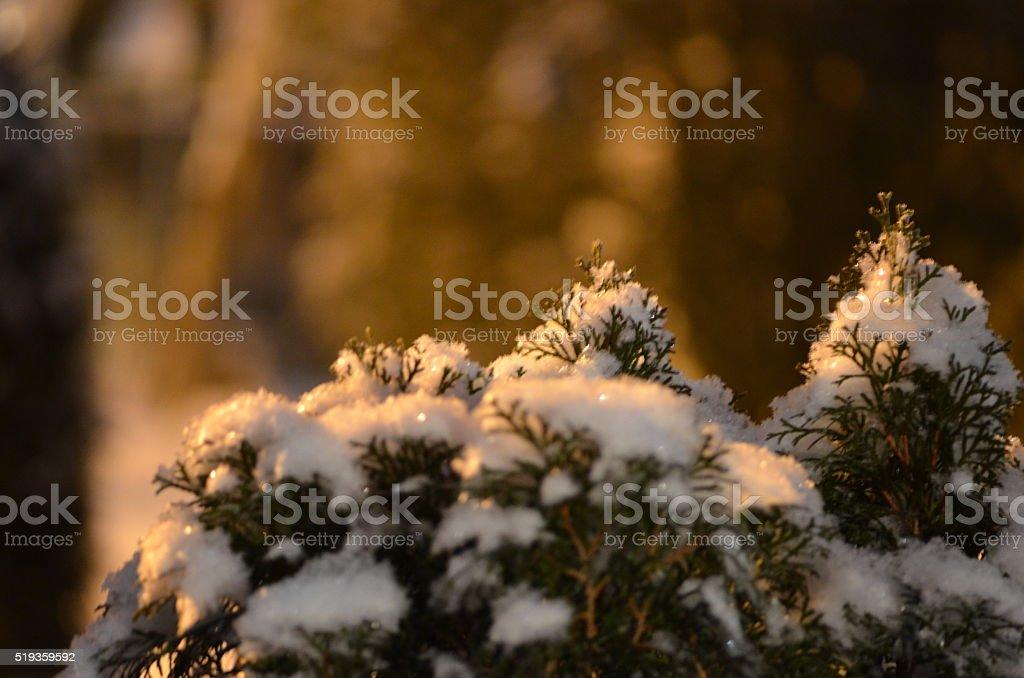 Winter Plants royalty-free stock photo