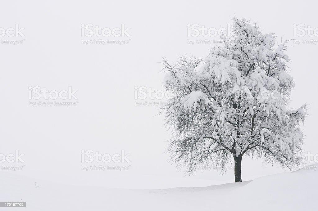 Winter Postcard stock photo
