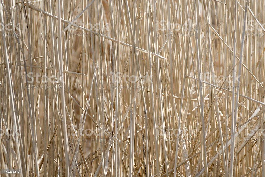 Winter Prairie Grass royalty-free stock photo