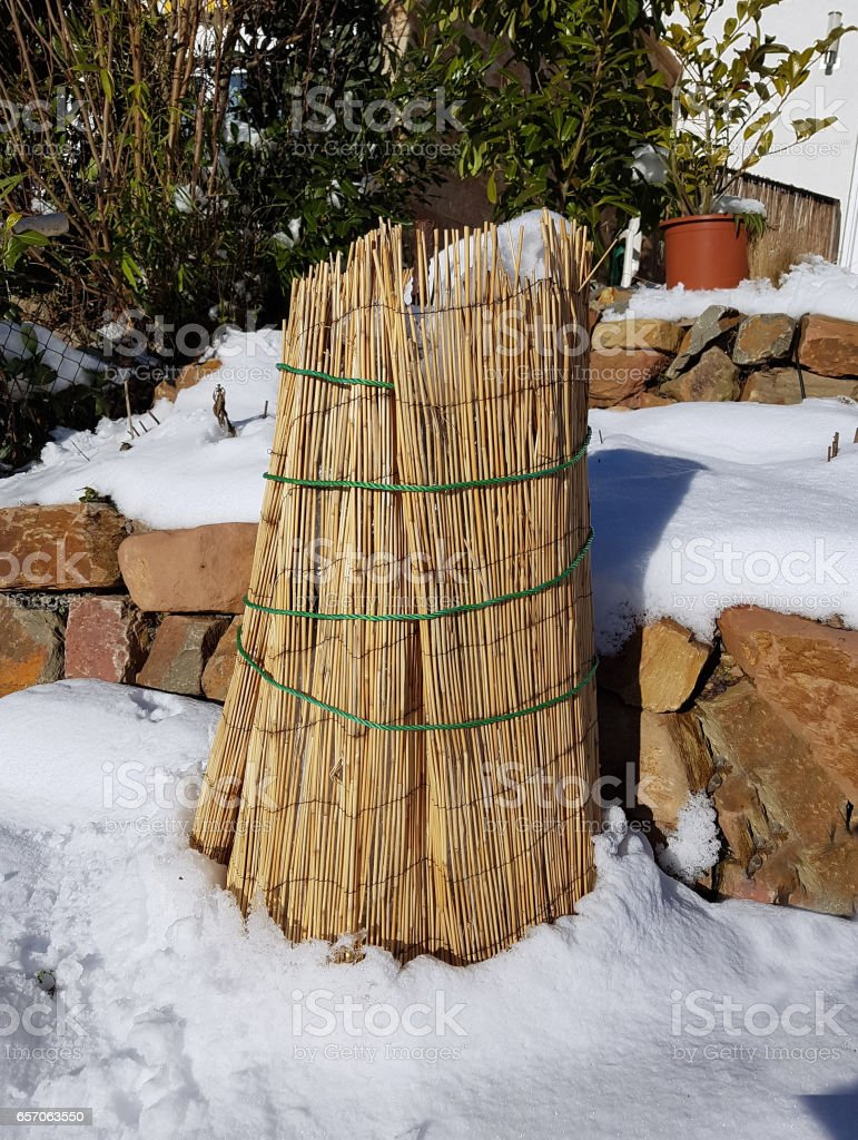Winter protection; Frost protection; Reeds stock photo