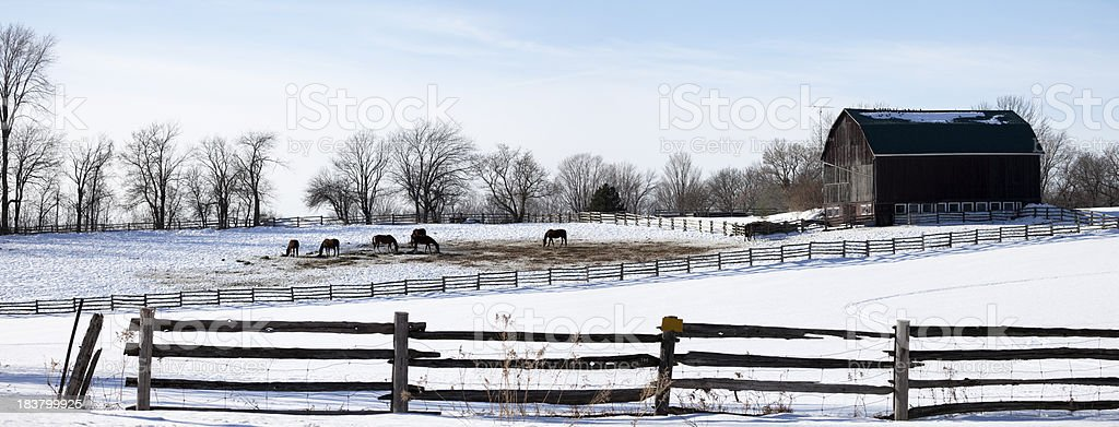 Winter Ranch Panoramic royalty-free stock photo