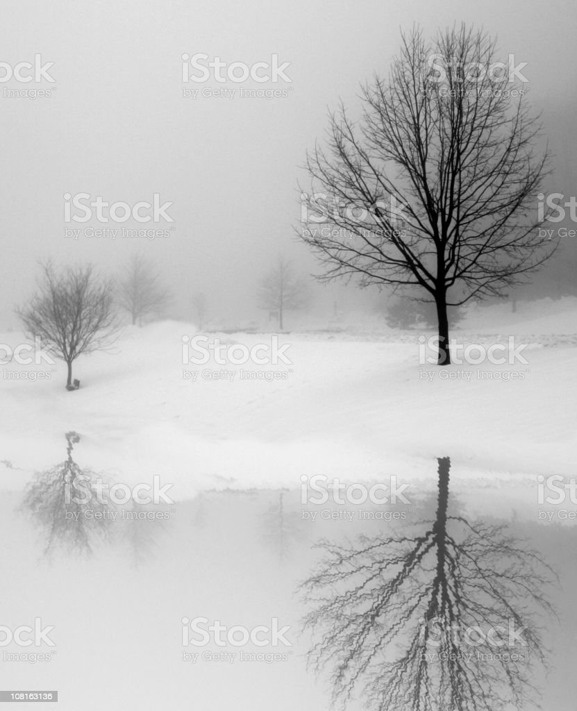 Winter Reflection royalty-free stock photo