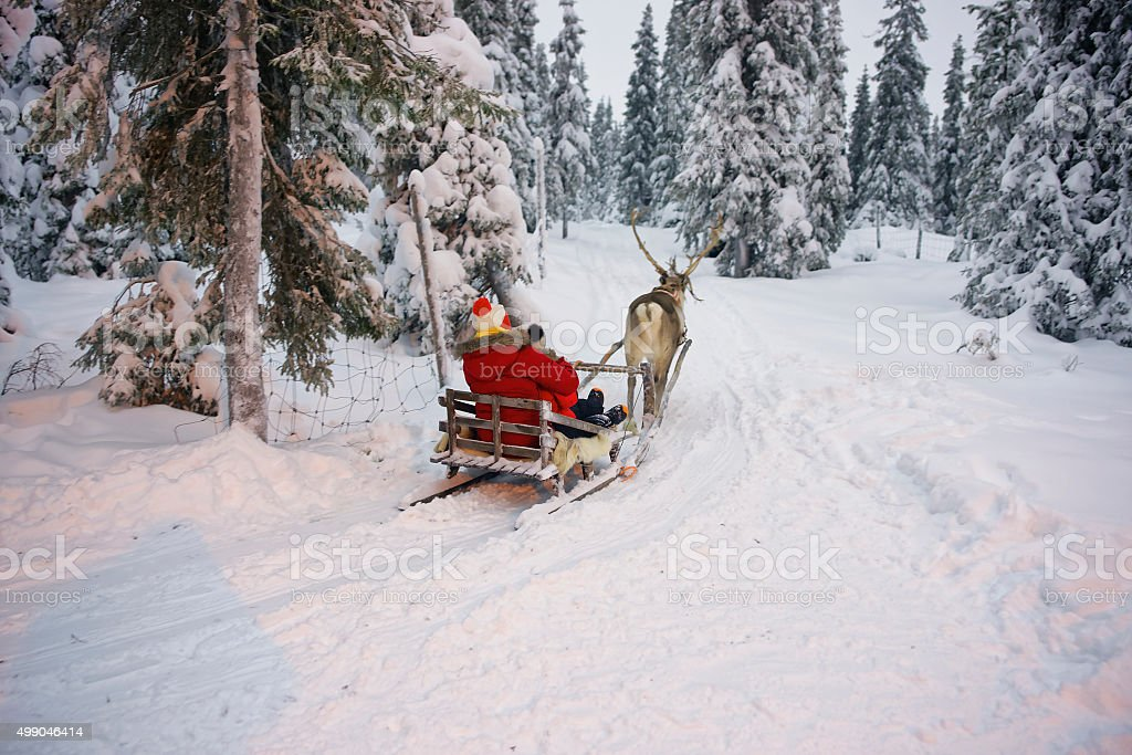 Winter Reindeer sled racing in Ruka in Lapland in Finland stock photo