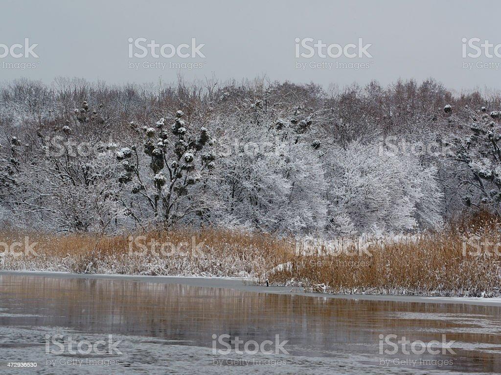 Invierno al río en la mañana foto de stock libre de derechos