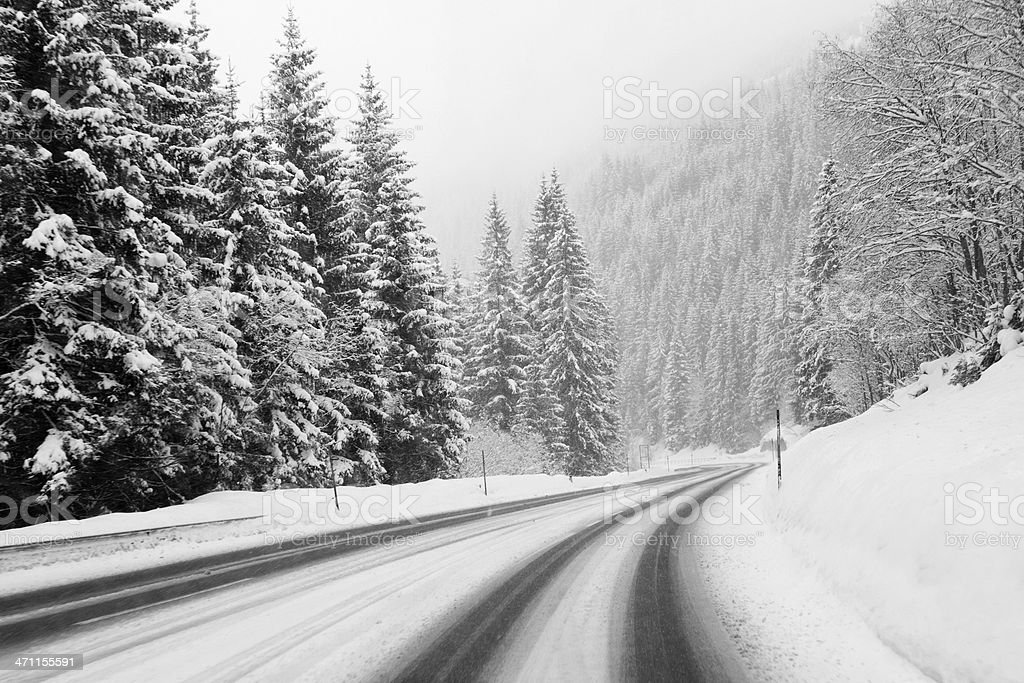 Winter road and evergreen trees after a snowstorm royalty-free stock photo