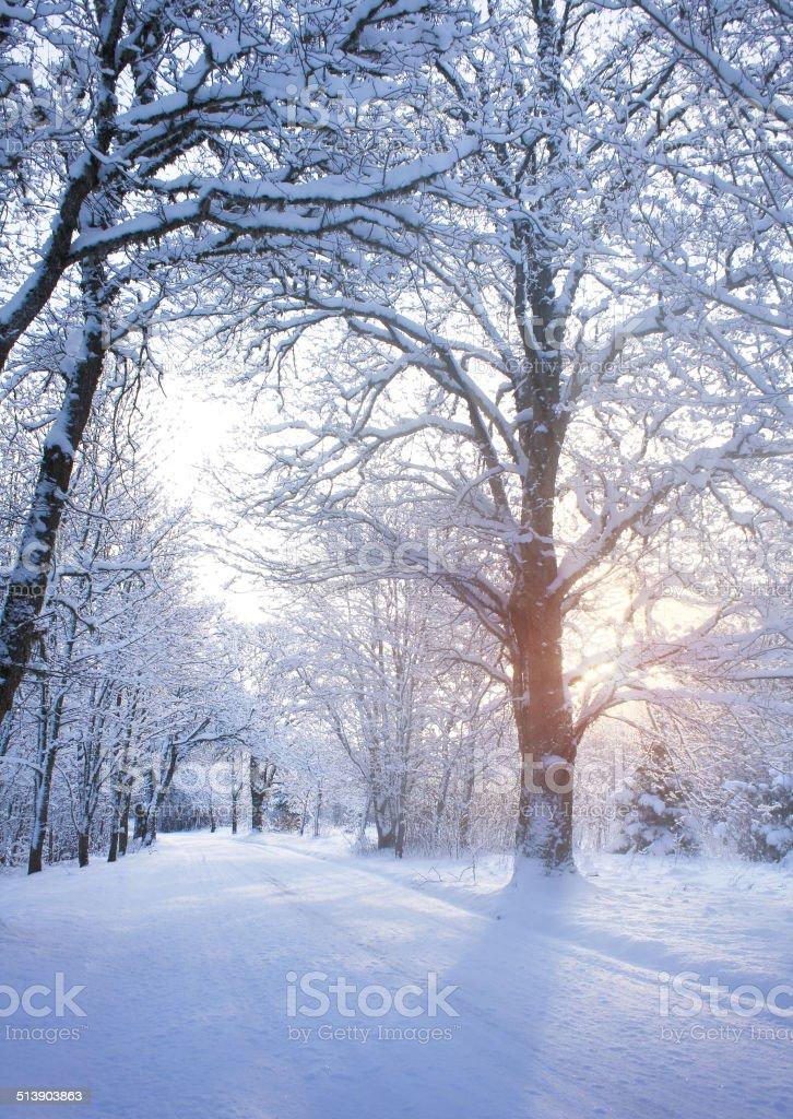 Winter road at sunrise stock photo