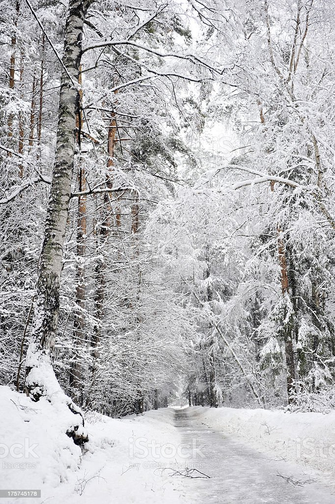 Winter road in a snowy forest royalty-free stock photo