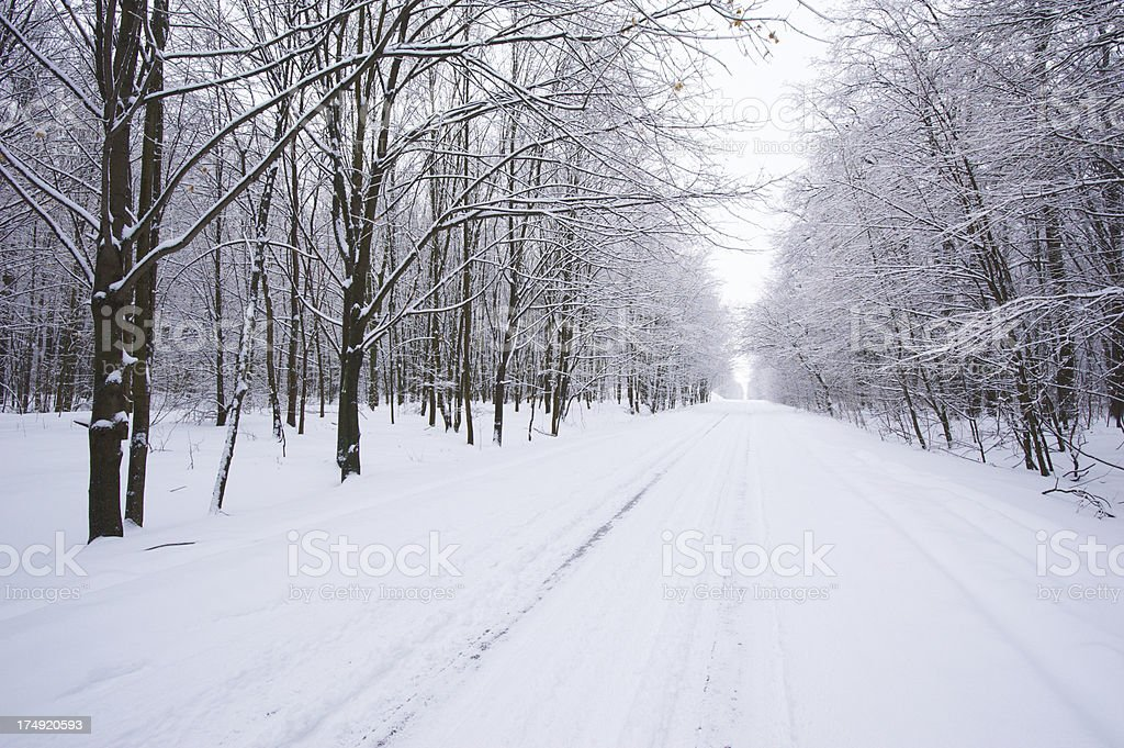 Winter road in the forest royalty-free stock photo