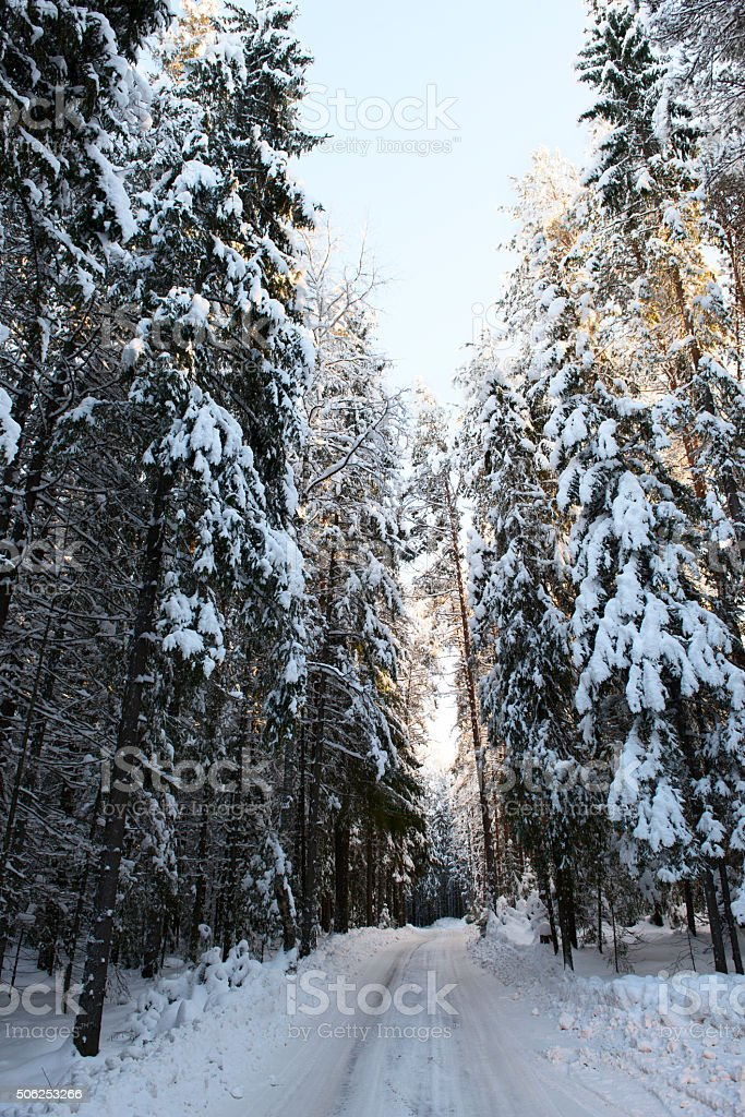 winter road in the forest stock photo