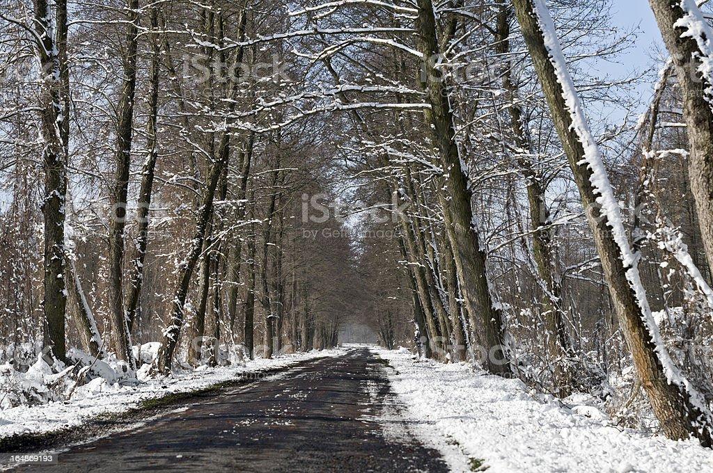 Winter road landscape royalty-free stock photo