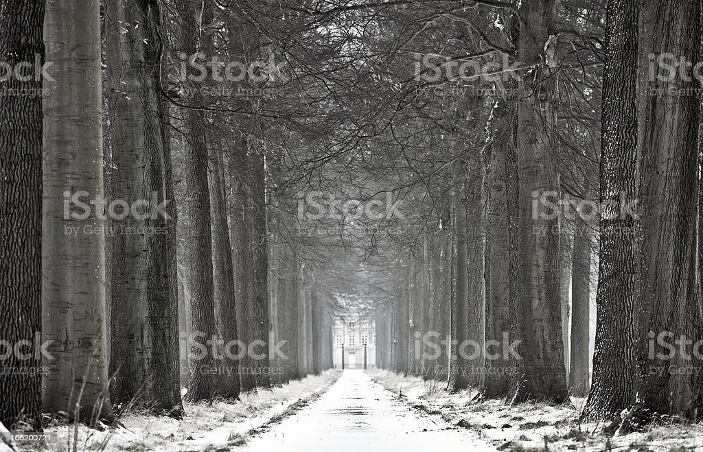 Winter Road Lined with Trees royalty-free stock photo
