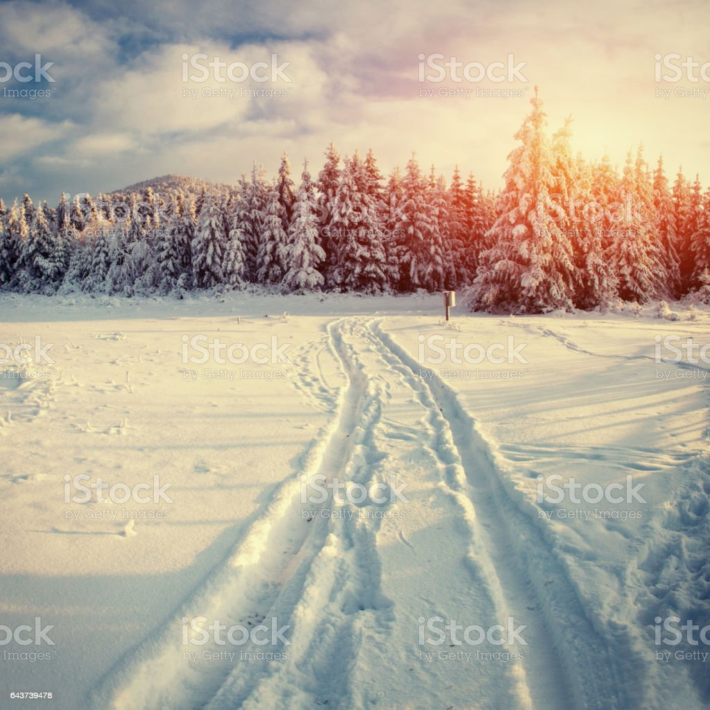 Winter road. Mysterious landscape stock photo
