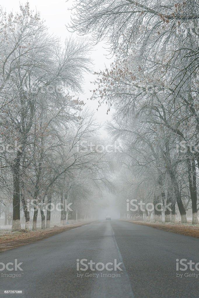 Winter road on foggy morning stock photo