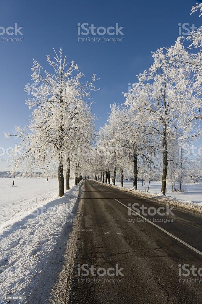 Winter road scenery stock photo