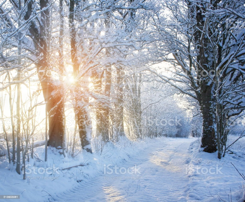 Winter road with sunlight stock photo