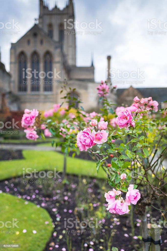Winter Rose. stock photo