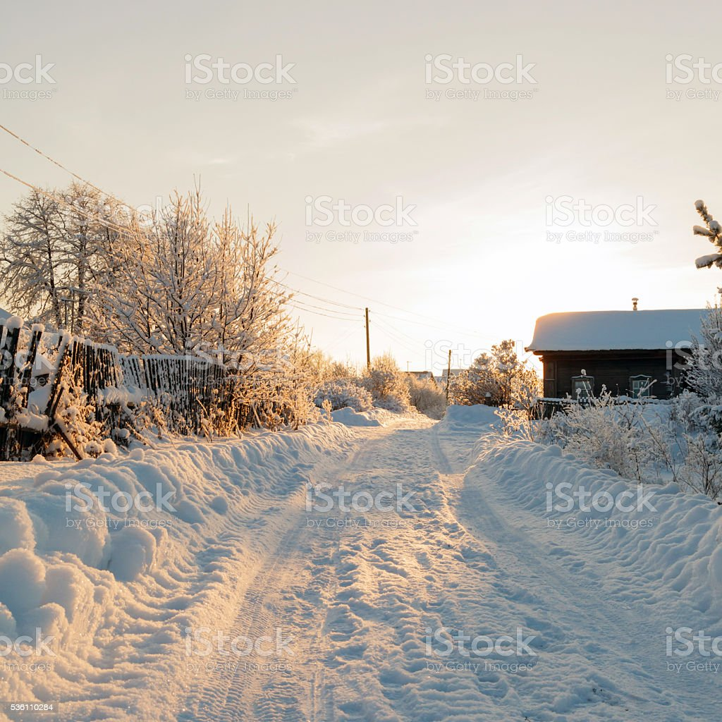 Winter rural road and trees in snow stock photo