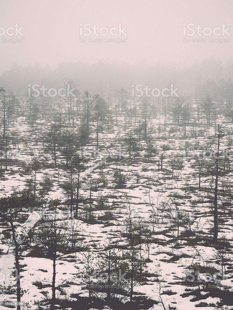 winter rural scene with fog and white fields - retro stock photo