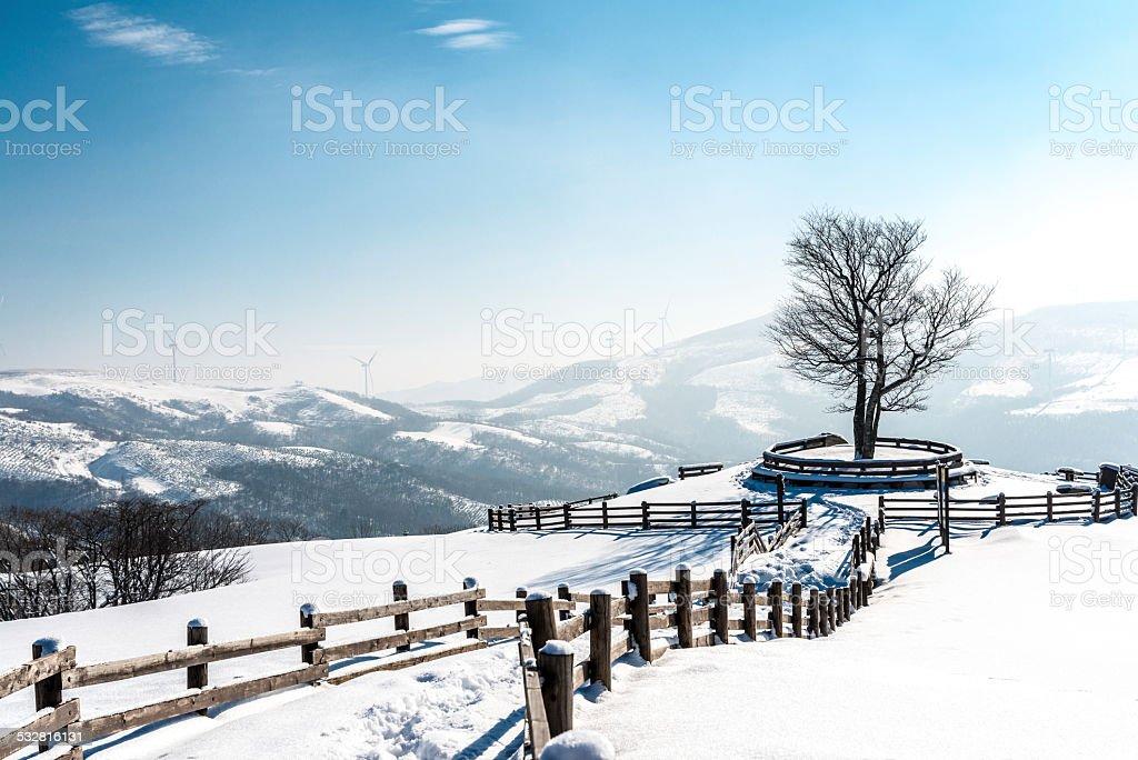 Zima Scape w farm zbiór zdjęć royalty-free