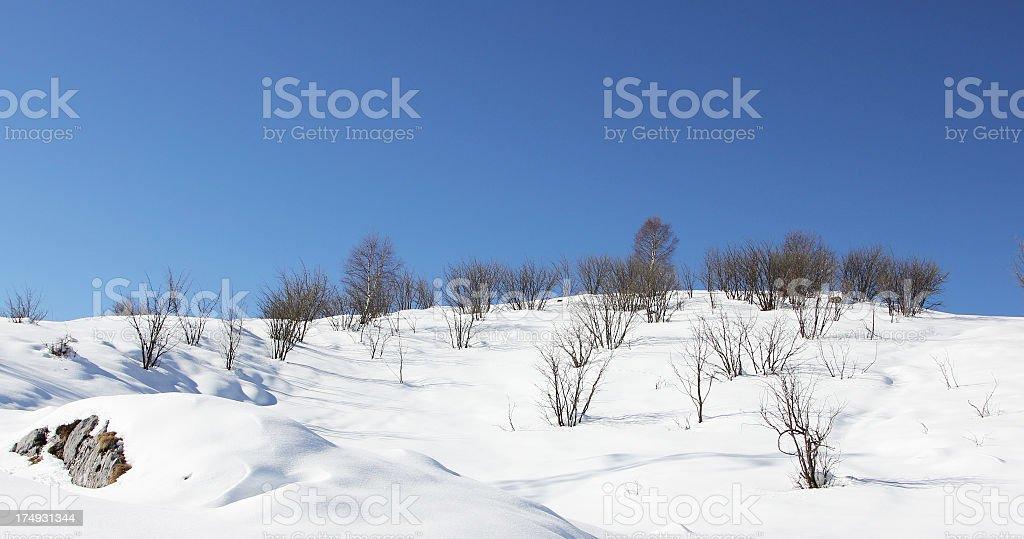 Winter Scenario royalty-free stock photo