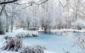 Winter scene at the botanical garden