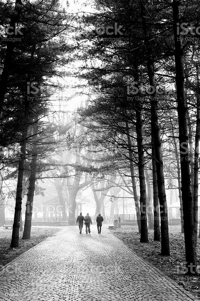 Winter scene. Black and White royalty-free stock photo