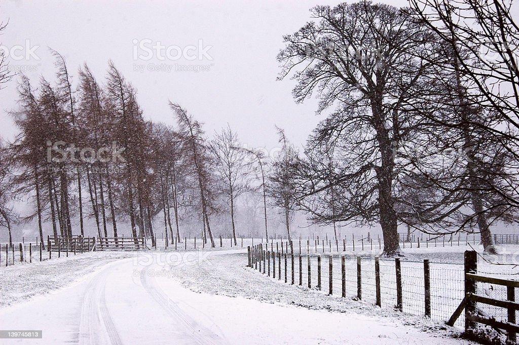 Winter Scene Driveway royalty-free stock photo