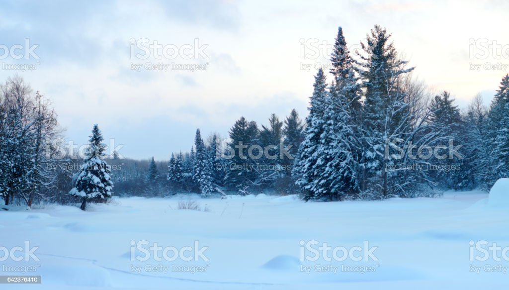 panoramic winter forest white land frozen trees in snow