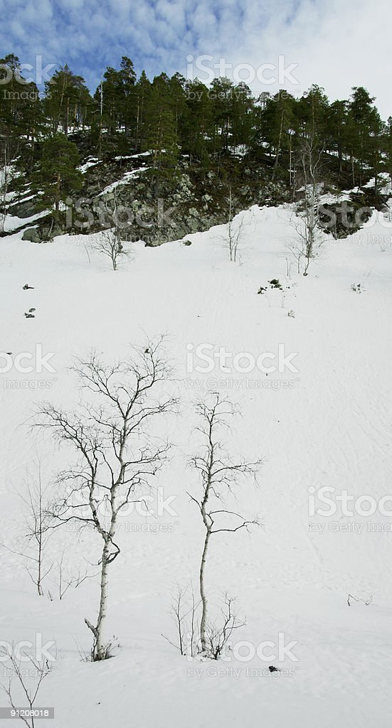 Winter scene in Lapland royalty-free stock photo