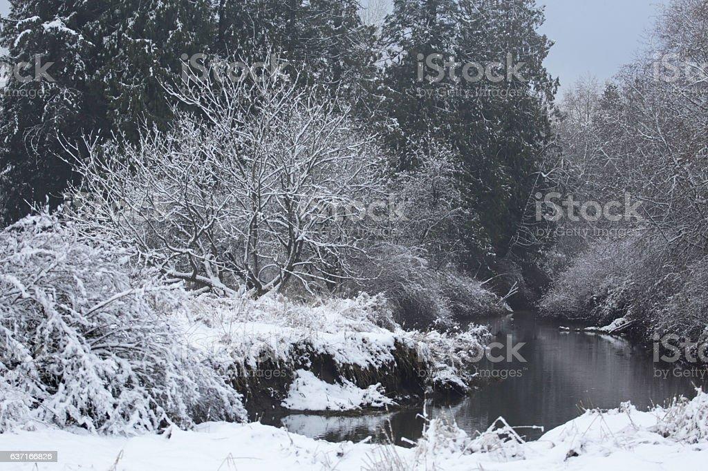 Winter Scene, Nicomekl River, Metro Vancouver, British Columbia, Canada stock photo
